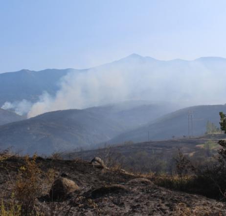 Възстановяват опожарените гори в Кресненското дефиле с евросредства