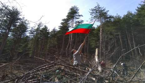 Деца залесяват с развято знаме