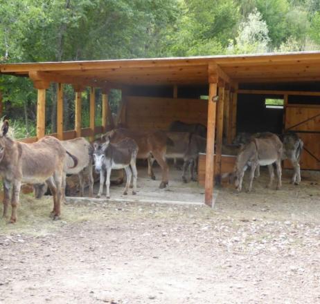 Швейцарци откриват санаториум за магарета в Баничан