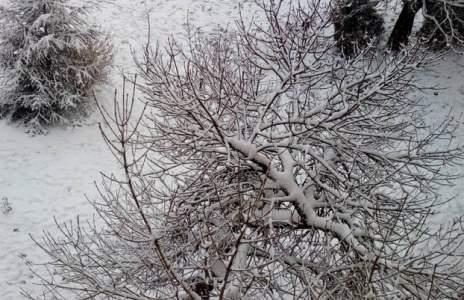 (снимки) Снежен Благоевград