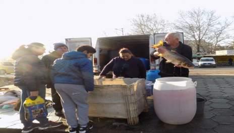 (снимки) Шаран и бял амур  по 6 лева килото на пазара в Благоевград