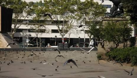 Когато и птиците летят с притворени криле…